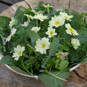 primrose-and-bb-leaf-salad-2014-550x550px-165kb
